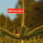 Wohin mit dem alten Weihnachtsbaum? Fünf Tipps, wie Sie Ihren Weihnachtsbaum richtig entsorgen oder wiederverwenden