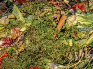 Abfall in der Biotonne