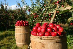 natürliche und frische Lebensmittel essen