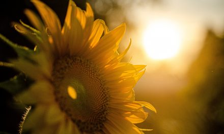 Die Kraft der Sonne nutzen: Wie Sie mit einer Solarthermie-Anlage Wärme für Wasser und Heizung erzeugen können